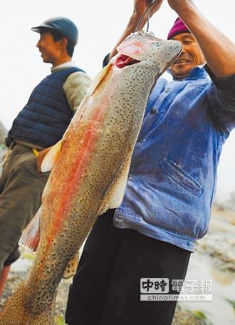 虹鱒當鮭魚賣 生魚片銷量下滑