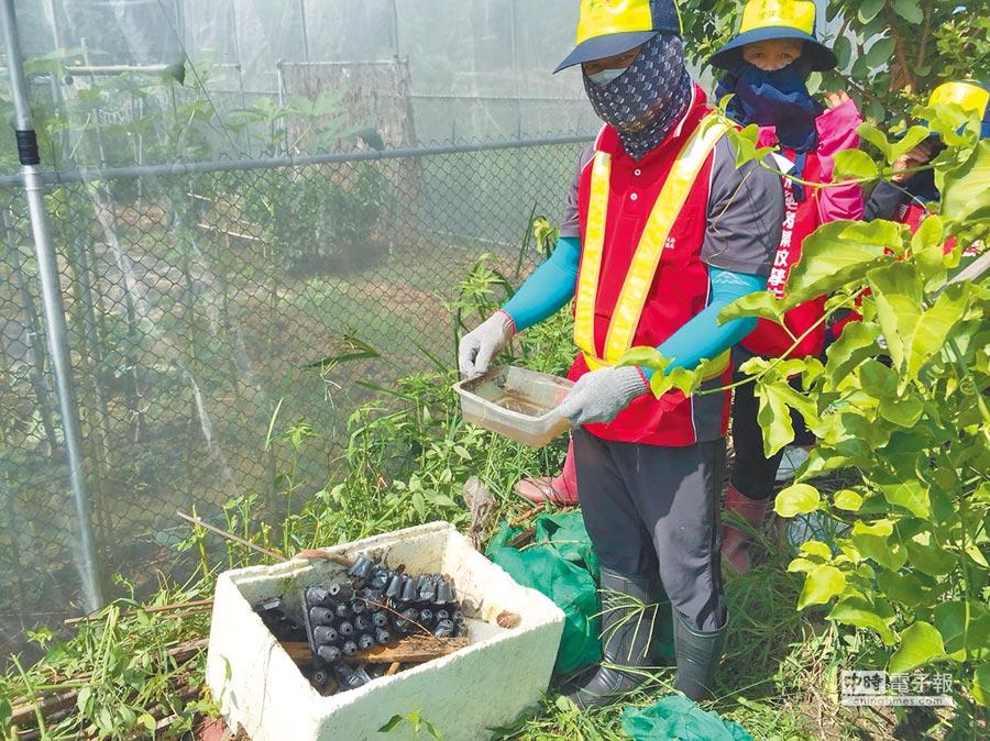 國內一口氣新增6例本土登革熱病例,禍首都指向菜園;圖為清潔人員清理台中菜園帶有孑孓的陽性容器。(圖:疾管署提供)