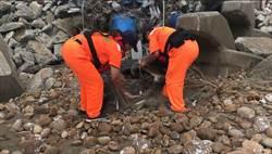 綠蠵龜受困港區 即刻救援穩定生命