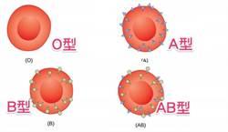 可望改善血荒 腸道酶可破解血型不通用問題