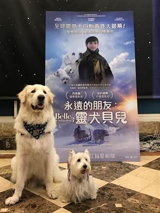 大白熊犬現身影城! 邀孩童看電影學習「轉大人」