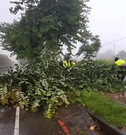 豪大雨路樹橫倒路中 警不畏風雨排除障礙