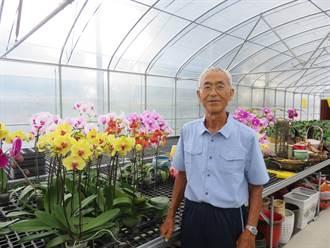 蝴蝶蘭育種推手游生全 盼藉花博推廣台中優質花卉
