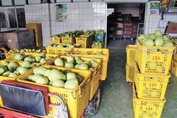 雨炸麻豆 文旦農指品質影響不大