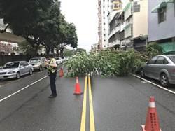 豪大雨路樹倒 中市警冒雨移樹交管
