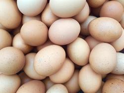 蛋價攀兩年新高!農委會:月底再漲2元