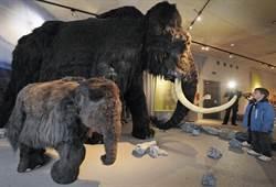 真實版侏羅紀公園 美科學家將在俄繁殖古生物猛獁象