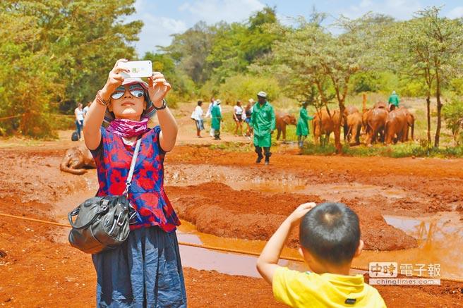 近年來,前往非洲旅遊的大陸遊客逐漸增多。圖為一名大陸遊客在肯亞,以小象為背景自拍留念。(新華社)