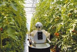 農業機器人崛起 重塑陸生產模式