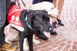 寵物》新竹市喜迎首隻導盲犬