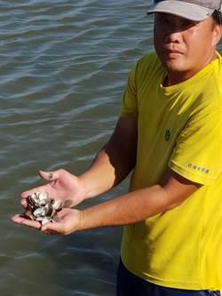 台南牡蠣受損逾3成 文蛤災情才正要浮現