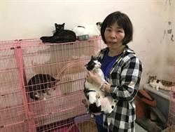 汐止婦人15年餵養流浪貓狗 成立收容所照顧90隻貓
