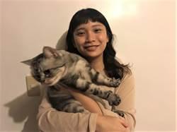 寵物》胖灰貓「喵咪」最愛「紙箱的誘惑」