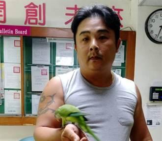 寵物》鸚鵡流浪記  動保處:飼主要做好寵物管理