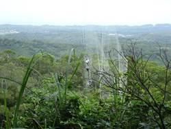 通霄山區驚見大型擄鴿網 賽鴿、禽鳥「掛網等死」