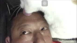 貼心喵皇「皮皮」會幫主人整髮、梳貓頭