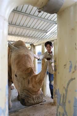 讓台灣被看見 莊福基金會號召全民「挺犀牛」