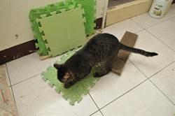 貓咪愛亂抓 耐心誘導家中不髒亂