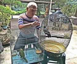觀音山莊莊主廖俊煌愛拈花惹草 最愛寵物八哥鳥和錦鯉
