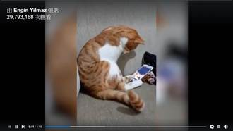 貓咪會想念主人嗎?看這則點閱3千萬催淚影片就知