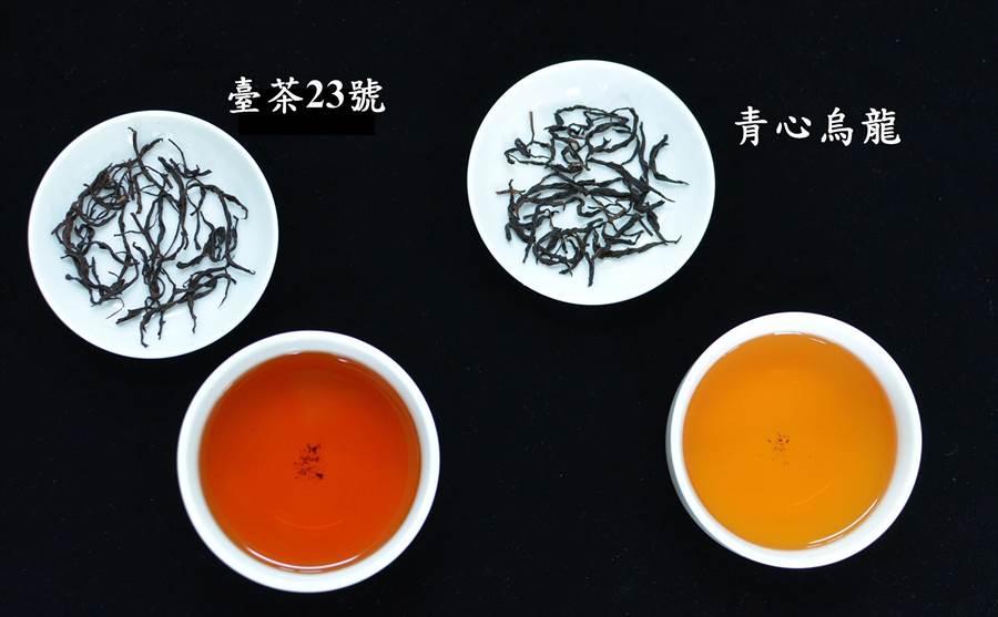 「台茶23號」與青心烏龍茶湯比較。(茶改場提供)