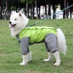狗拒绝潮湿 下雨出门要注意