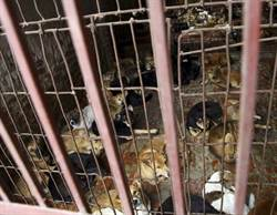 防狂犬病 越南籲民眾戒吃狗肉引爭議