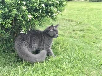 旅行煞到牠 型男愛上貓中巨人
