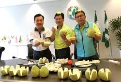 大坑柚子增產三成 中市議員賣力行銷