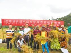陸專家赴賴比瑞亞 培訓種植雜交稻