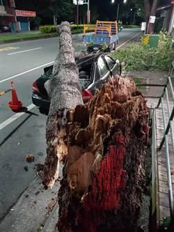 不敵山竹外圍環流 知本樹倒壓毀小客車