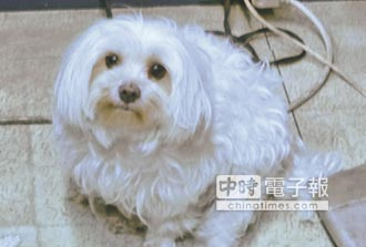 藥局小店犬BIBO 超萌活招牌