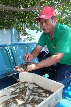 打擊殭屍蝦謠言 漁業署與養蝦業者闢謠
