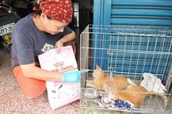 協助流浪貓咪認養的肉圓小吃店