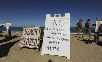 80年來首度 美東岸度假勝地驚傳鯊魚咬死衝浪客