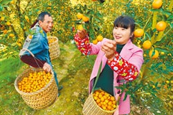 阿里創豐收購物節 打造農業雙11