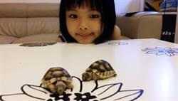 爸媽的逆襲 讓小三養陸龜