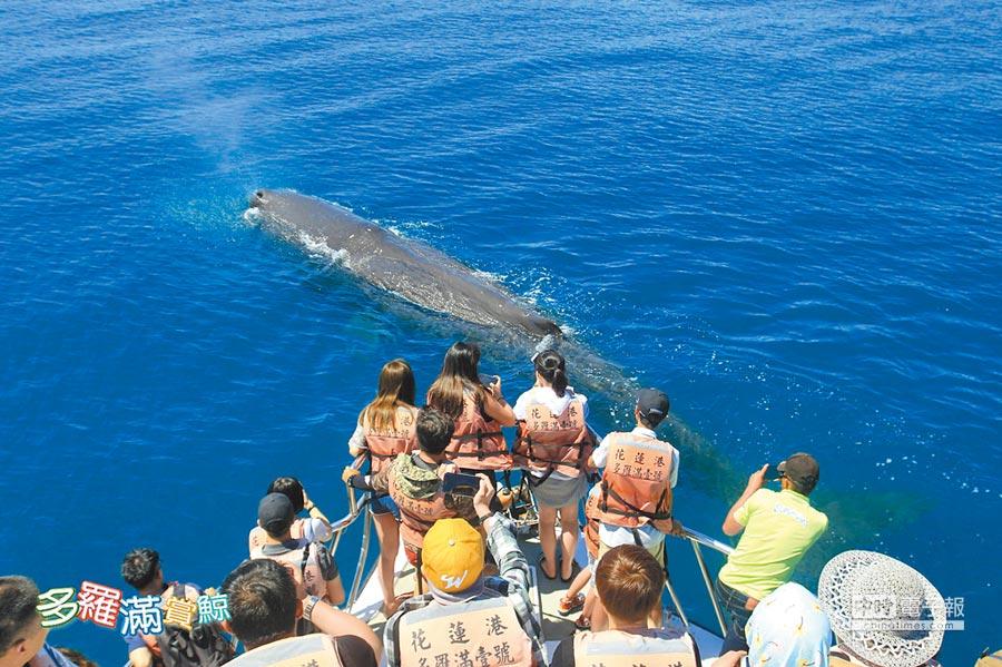 花蓮賞鯨業者強調,只要發現鯨豚出沒,船隻就會怠速,避免造成干擾。(許家寧翻攝)