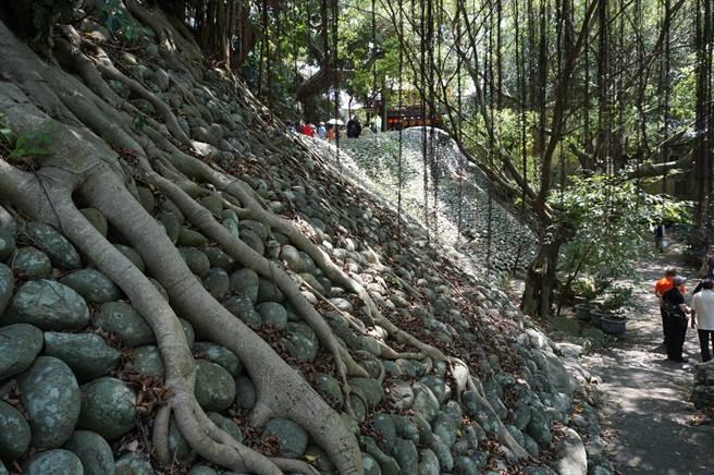 建於清代的「石鯉魚」堤防,以卵石砌成,自永安宮鯉魚伯公祠蜿蜒而下,狀似「鯉魚」因而得名。(王文吉攝)