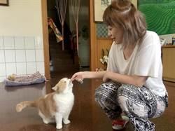 澀水皇茶招牌貓「阿薩姆」超萌