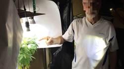 外籍英語師種大麻、傳教士收毒包裹 遭查獲送辦