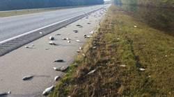 佛羅倫斯侵襲美東後 上萬爛魚留在高速公路上