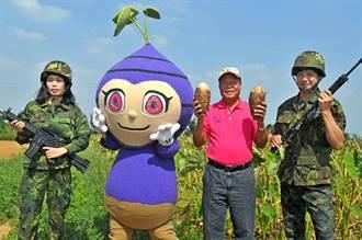 烈嶼鄉「芋頭季」29日開幕  大家一起來吃喝玩樂