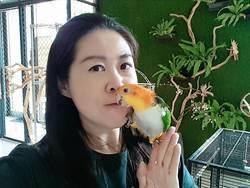 3隻鸚鵡愛黏人 她樂當鳥奴