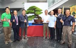 台中市樹五葉松展覽 樹齡500年「閃電」吸睛