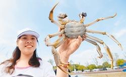 紙螃蟹橫行 大閘蟹銷售亂象叢生