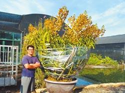 花博種原奏鳴曲 營造植物方舟