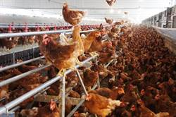 雲林》雲林縣新設畜牧場加嚴審核  業者不服訴願農委會遭駁回