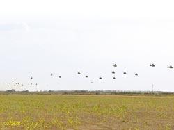 低空遍地開花突擊 陸練對台戰法