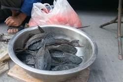 魚販叫賣黑色長角怪魚 「大叔想煲湯」內行人驚呆:細菌多又臭